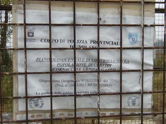 ordinanza provinciale cattura cornacchie